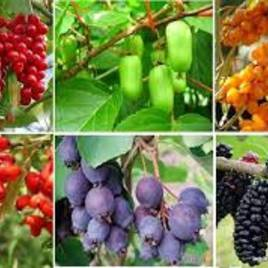 Плодово-ягодные кусты, общее