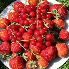Різні фрукти та ягоди
