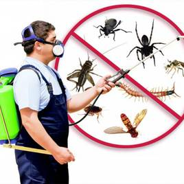 Pest Control (контроль шкідників)