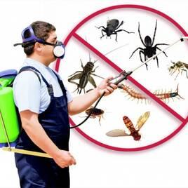 Pest Control (контроль вредителей)