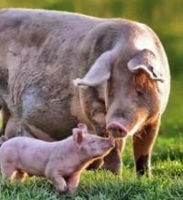 Різні корми для тварин