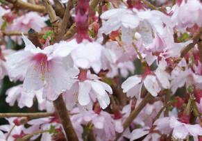 Лиственные и декоративные деревья, общее