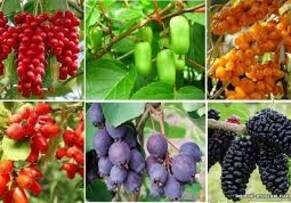 Плодово-ягідні кущі, загальне