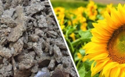 Чому макуха соняшнику в Україні завоювала ринок: сфери застосування!