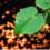 XIAMETER OFX - 5211 SUPERWETTING AGENT