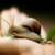 sklad-sirovatki-dekolte-udoskonaleniy