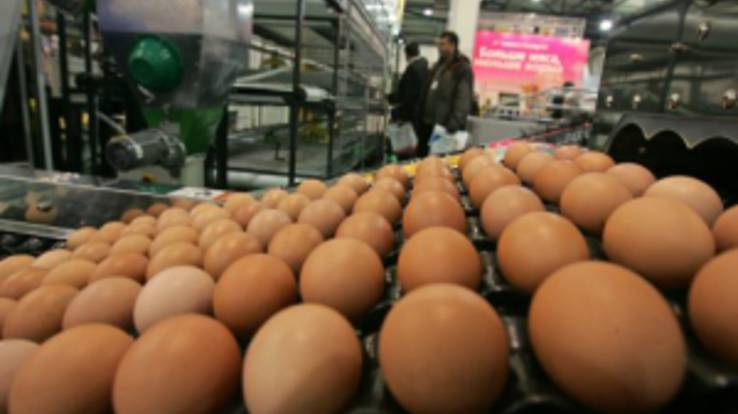 Ukrainian egg production company ranked as world leaders