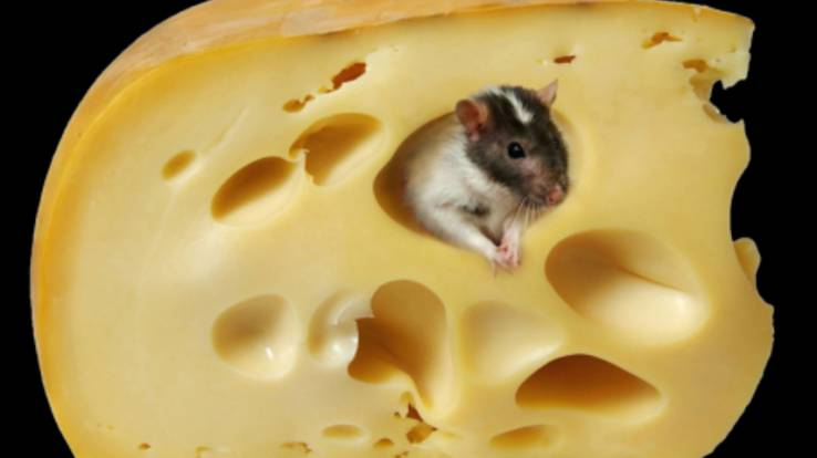 Today begin to operate import ban on Ukrainian cheese