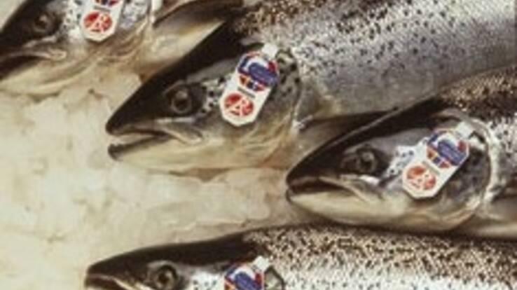 """""""Хорта Груп"""" здійснює прямі поставки шотландського лосося (Scottish Sea Farms)"""