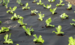 Купити агроволокно для теплиць: декілька порад та рекомендацій для правильного вибору