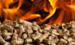 Сравнительная характеристика брикетов и пеллет из различной биомассы с другими видами топлива: экологический аспект