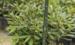Чому варто обрати листяні дерева для озеленення ділянки?