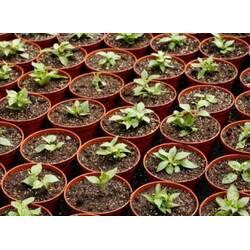 Советы опытного садовода или как я научился выбирать горшки для рассады