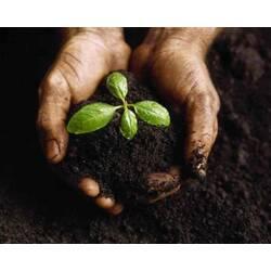 Удобрения для комнатных растений — залог их красоты и Вашего хорошего настроения!