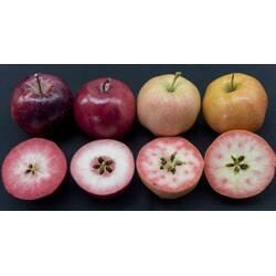 Купить яблоки оптом — как выбрать самые полезные?