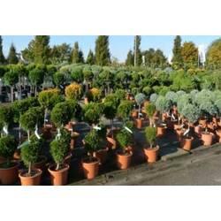 Выращивание декоративных растений и где контейнеры для саженцев купить?