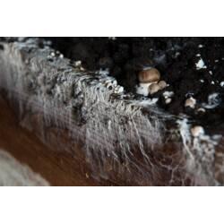 Ідея для бізнесу - вирощування грибів з міцелію вдома