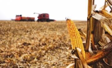 Очистка кукурузы : этапы и зерноочистительной техники.