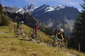 Выбираем горный велосипед: для гор и не только