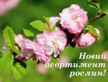 Увага! Новий асортимент рослин в Садовому центрі та розсаднику «Валентин і Наталія»