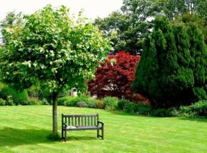 Увага! Тепер можна купити дерева для саду вирощені на замовлення!
