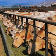 Как улучшить производительность домашних животных?