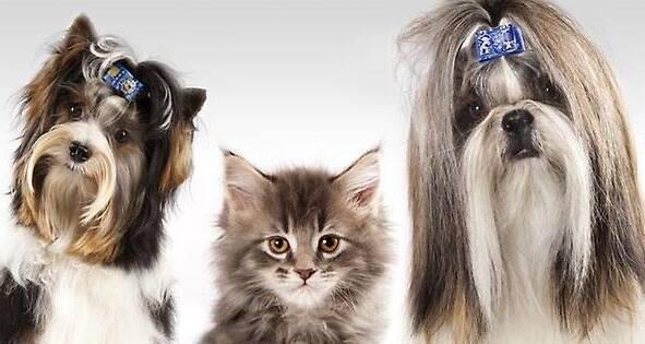 Здійснюємо креативний грумінг кішок та собак за доступними цінами!