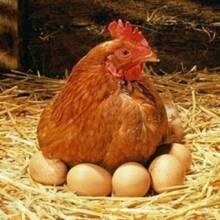 Внимание! Новое поступление кормовых добавок для птицефабрик