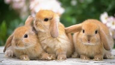 Обладнання для птахівництва та кролівництва: нові поставки з Європи!