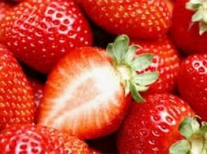 Купуйте недорого саджанці полуниці оптом в ОПГ Анастюк!