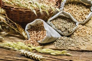 Новинка от компании: предлагаем купить элитные семена зерновых культур!