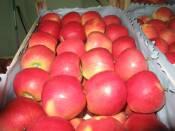 Купить яблоки Топаз на экспорт (фото)