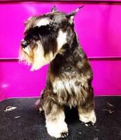 Стрижка собак (фото)