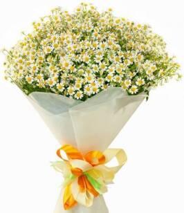 Оновлений асортимент поліпропіленової плівки для квітів від ТОВ «Рута»!