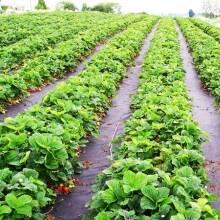 Агроволокно спасет урожай