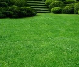 """Невибагливий газон стійкий до посухи від компанії """"АгроСвіт"""""""