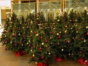 Цены на новогодние елки падают