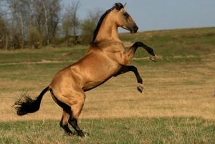 Лошадь оценили в 200 миллионов долларов