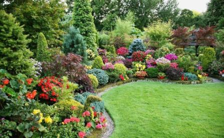 Знижки на декоративні рослини для